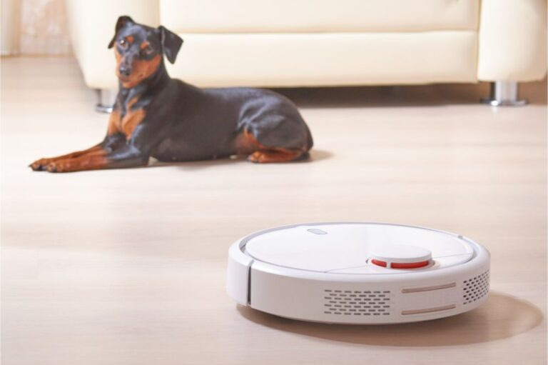 robot vacuum cleaner does the house cleaning, the dog lies nearby and observes its work